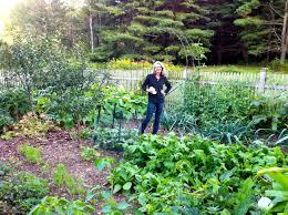 Deer Proof Fence For Vegetable Garden October 2011 Garden Rant