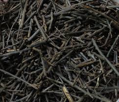 shredded tree fern fiber soil amendment orchid nepenthes
