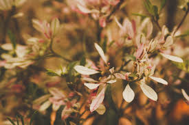 free stock photo of beautiful flowers pink flowers spring flower