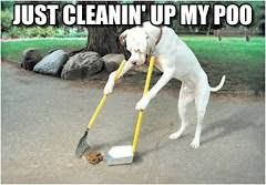 Dog Poop Meme - dog cleaning poop memes on memegen