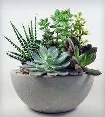 succulent arrangements succulent how to make succulent terrarium diy tutorial flower