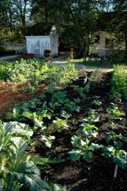 how to start a vegetable garden bonnie plants