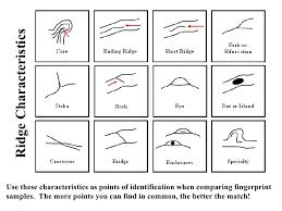 fingerprint ridge characteristics worksheet u2013 images free download