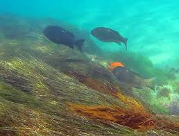 California snorkeling images Best california snorkeling shaw 39 s cove jpg