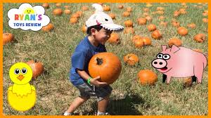 kids family fun trip to the farm halloween pumpkin patch corn maze
