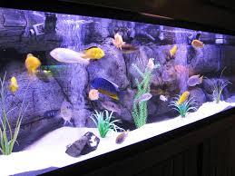 aquarium decoration ideas freshwater freshwater aquarium design ideas internetunblock us