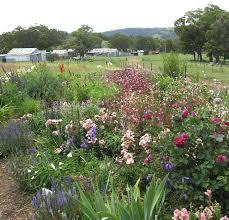 40 best cottage garden images on pinterest cottage gardens