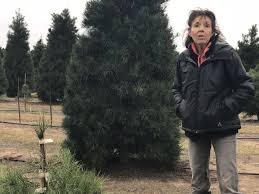 local christmas tree farm offers full holiday preparations news