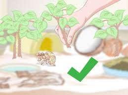 3 ways to decorate your hermit crab u0027s tank wikihow