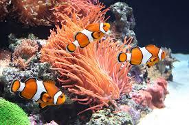 aquarium fish feeding tips