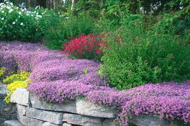 Rock Gardens Images by Services Black Rock Landscapes Inc Haliburton Bancroft