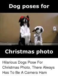 Christmas Dog Meme - dog poses for christmas photo hilarious dogs pose for christmas