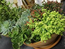 the basics of succulent care world of succulents