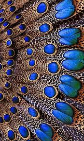 158 best peacock design images on pinterest colors color