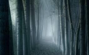 stunning forest wallpapers reuun com