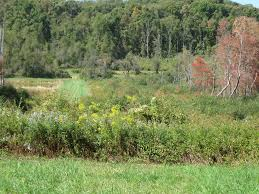 plants native to maryland pollinator habitat to be restored on bge rights of way located in