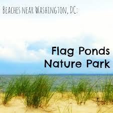 Washington Dc Flag Beaches Near Washington Dc Flag Ponds Nature Park
