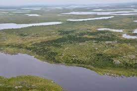 tundra nasa studies greening arctic nasa