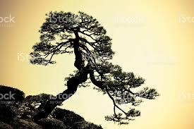 japanese tree silhouette stock photo istock