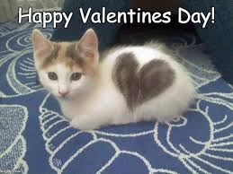 Cute Valentine Memes - cute cat heart blank template imgflip