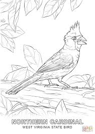 bird coloring page west virginia state bird coloring page free printable coloring pages