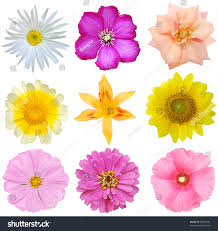 late summer flowers north america stock photo 83905681 shutterstock