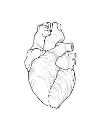 anatomical coronary heart define google search u003e u003e u003e take a