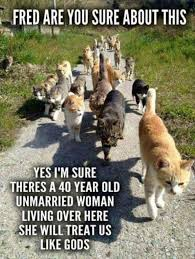 Crazy Cat Lady Memes - 20 hilarious cat lady memes you would totally love i can has