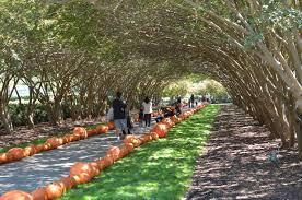 Dallas Arboretum And Botanical Garden Dallas Arboretum Hospitably Yours