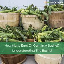 how many ears of corn in a bushel understanding the bushel nov