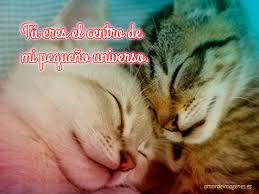 imagenes de gatitos sin frases 50 imágenes de gatitos frases gratis bonitos tiernos