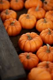 Small Pumpkins Pumpkins Pumpkins Pumpkins Orange You Lovely Pinterest