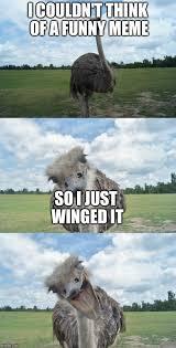 Ostrich Meme - bad pun ostrich imgflip
