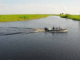Florida Lakes images Report half of florida lakes 39 surface have 39 elevated 39 algae levels JPG&a