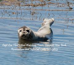 New York wildlife tours images Seal watching tours long island new york jpg