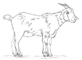 free coloring pages goats full goat coloring pages billy page free printable 6313