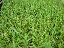 Alternative To Grass In Backyard by The 5 Best Grass Types For Baton Rouge La Lawns Lawnstarter