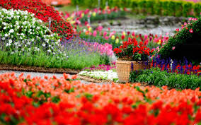 1 wonderful beauty of colourful garden top one in lush greenery