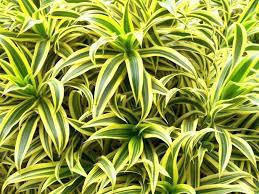 plante d駱olluante chambre plantes depolluantes chambre bureau plante verte depolluante pour