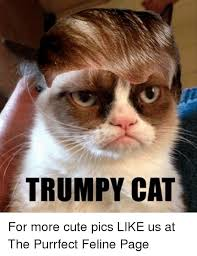 Purrrfect Meme - trumpy cat for more cute pics like us at the purrfect feline page