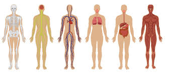 Body Anatomy Back The 7 Biggest Mysteries Of The Human Body
