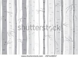 birch tree forest stock images royalty free images u0026 vectors