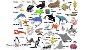 pictures of sea animals video dailymotion