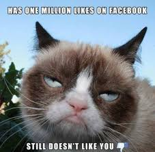 Create A Grumpy Cat Meme - 25 of the best grumpy cat moments