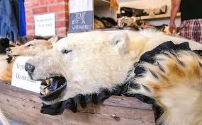 Polar Bear Fur Rug Beast Of Contention Latest News Earth Island Journal Earth