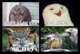 Owl Memes - owl meme comic by equinox029 on deviantart