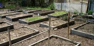raised bed gardening faq today u0027s homeowner