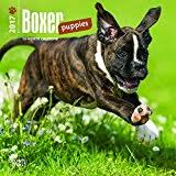 boxer dog 2016 calendar boxer dogs calendar 2017 amazon co uk office products