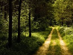 forest road wallpaper wallpapers for free download about 3 043