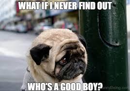 Depressed Pug Meme - 88 superb pug memes pictures